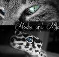 Milo and Mocha