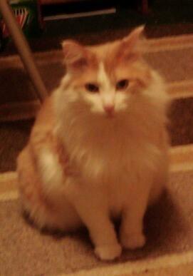 kitty my kitty