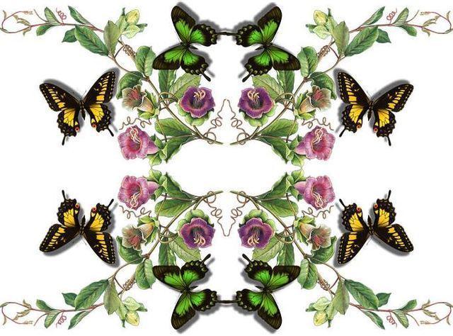 pretty - Butterflies P...
