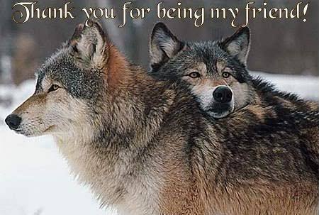 wolf thank you for being my friend