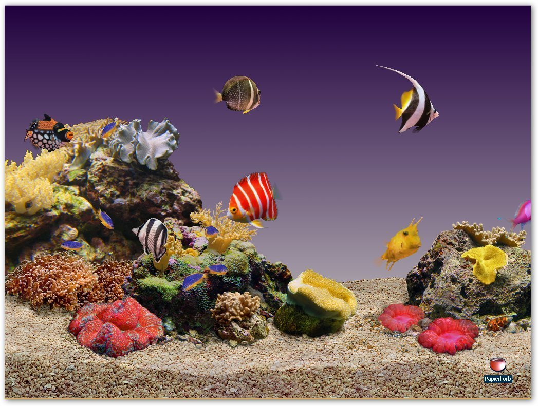 Aquariums images aquarium hd wallpaper and background for Aquarium zierfische