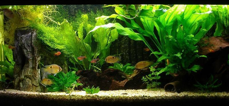 ... Aquariums, Freshwater Aquariums, Aquarium Fish, Aquarium Ideas