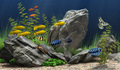 Aquarium - aquariums photo