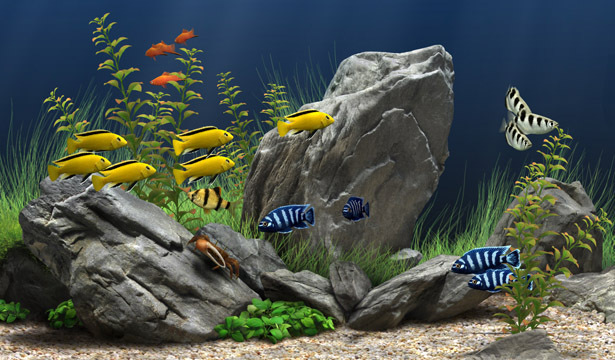 Aquariums images Aquarium wallpaper and background photos (9037632)