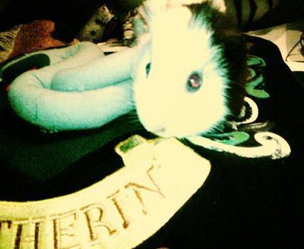 Baby Lucius