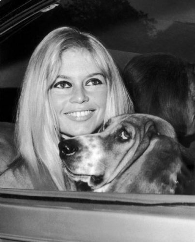 ブリジット・バルドー 壁紙 containing a basset titled Brigitte Bardot