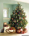 Christmas Tree - martha-stewart photo