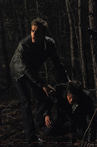 Damon and Stefan Salvatore 壁紙 probably containing an american white birch, a sitka spruce, and a beech entitled Damon and Stefan