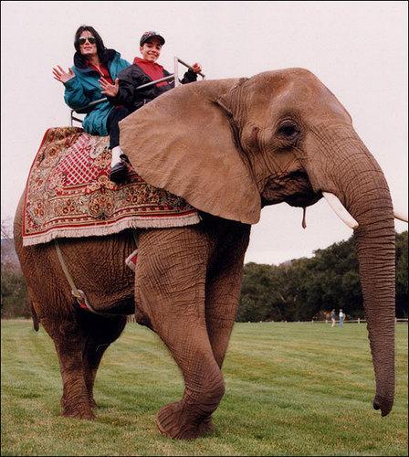 """elephant ride"""