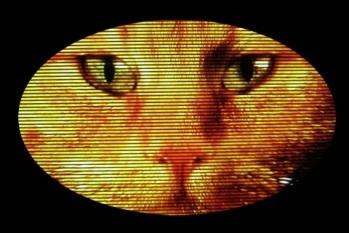 Andrew Cullen's अवतार - Cheshire Cat