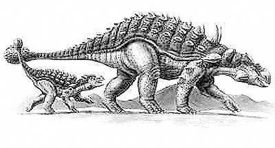Ankylosaur 1