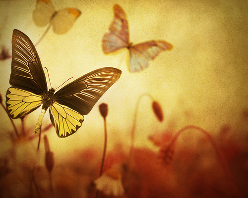 Butterflies wallpaper called  Autumn Butterflies