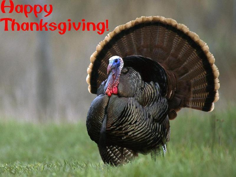 HAPPY THANKSGIVING Turkey - Thanksgiving Wallpaper (9157407) - Fanpop