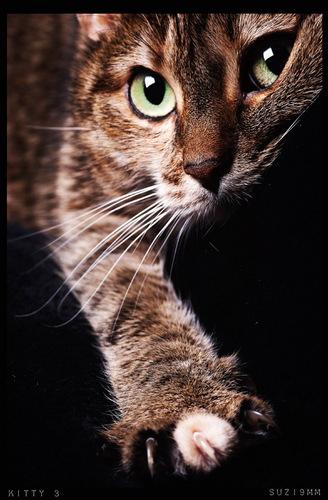Kitties :3