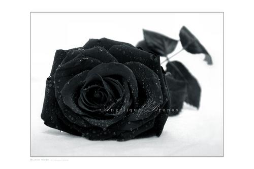 玫瑰 :)