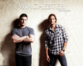 SPN - dean-winchester wallpaper