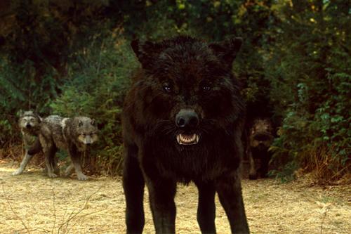 Wolf Pack Stills