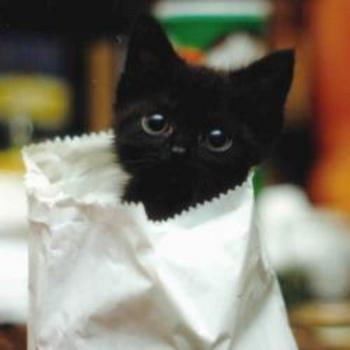 Kitties 壁紙 possibly containing a paper towel called cat
