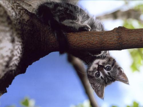 Kitties वॉलपेपर titled cat