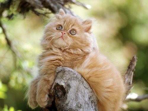 Kitties wallpaper entitled cat