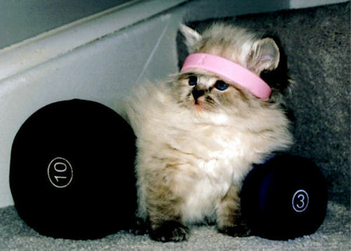 Kitties wallpaper with a dumbbell called cat
