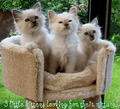 cat - kitties photo