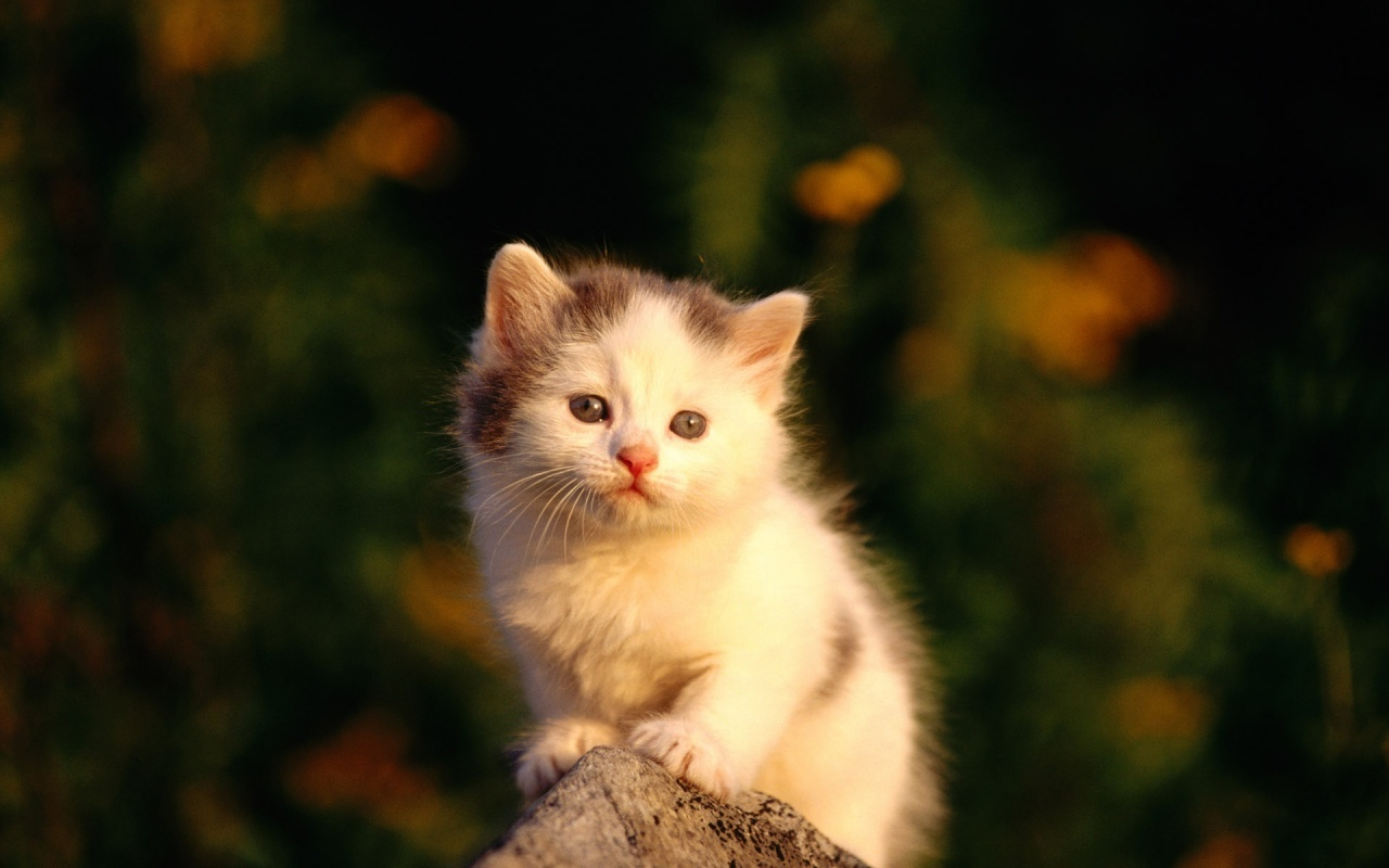 kitties images kitty hd wallpaper and background photos