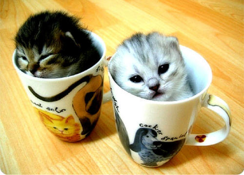 Kitties wallpaper with a coffee break titled kitty