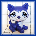 littlest pet shop husky dog 1217