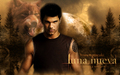 some made by me - jacob wallpaper new moon