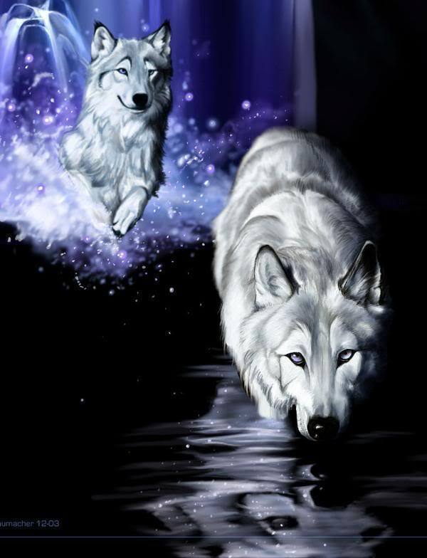 Wolves white wolf fantasy