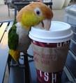 A Bird That Drinks