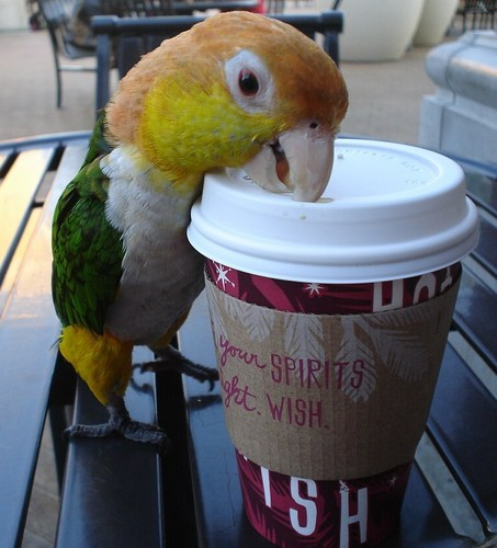 A Bird That Drinks