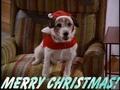 圣诞节 Eddie