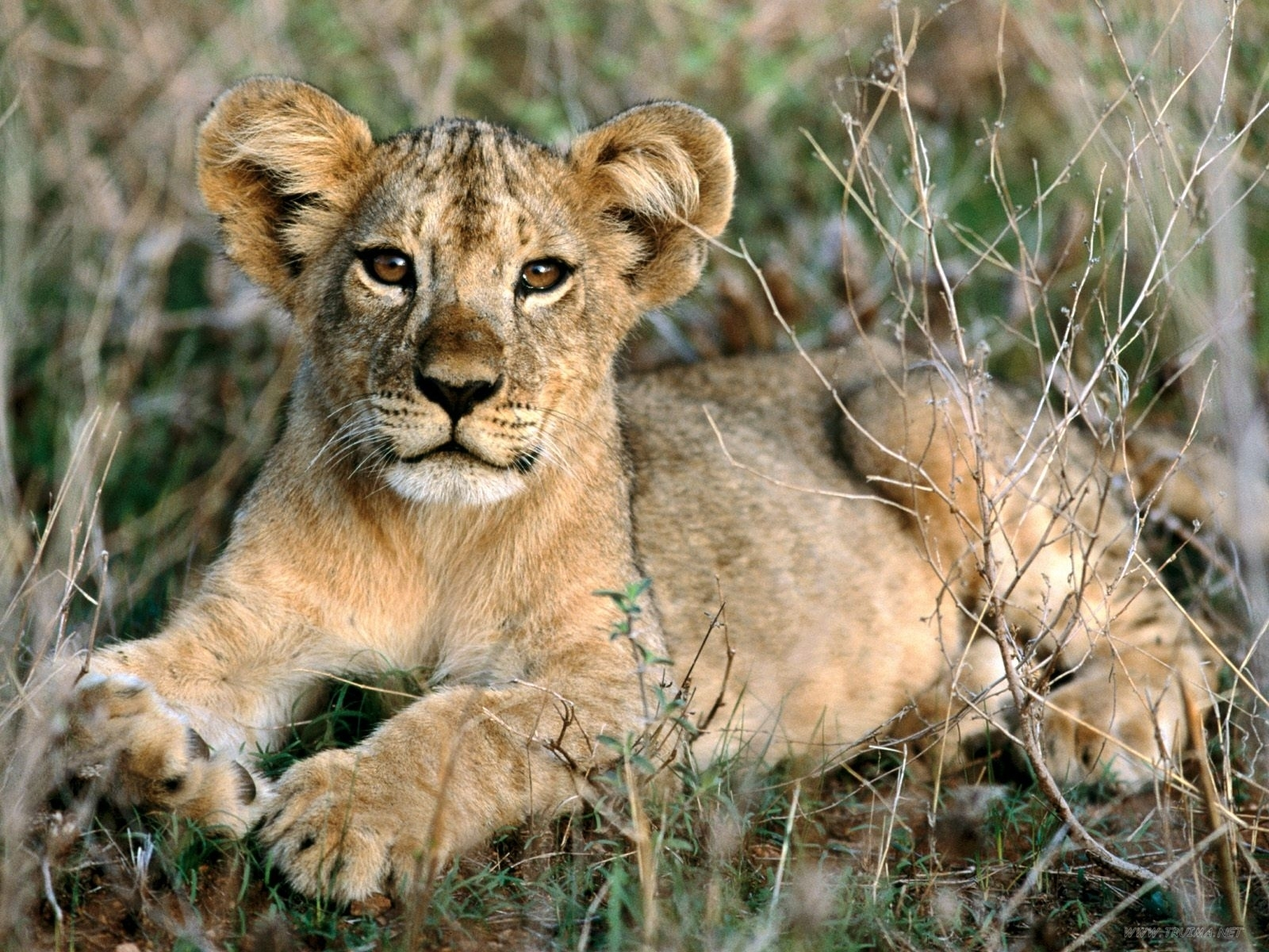 African animals cute wallpaper