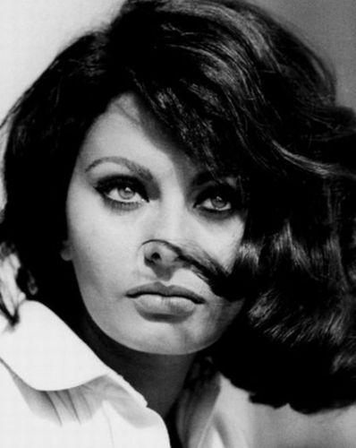 Sophia Loren wallpaper with a portrait called Sophia Loren