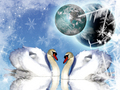 Swans In A Winter Wonderland - winter wallpaper