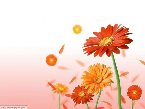 Google wallpaper with a common daisy, a daisy, and a blue eyed african daisy entitled flower