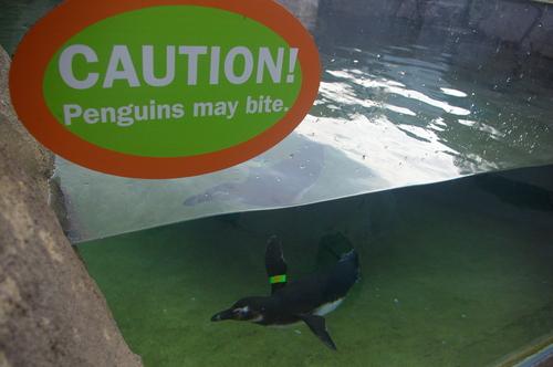 Penguins May Bite!