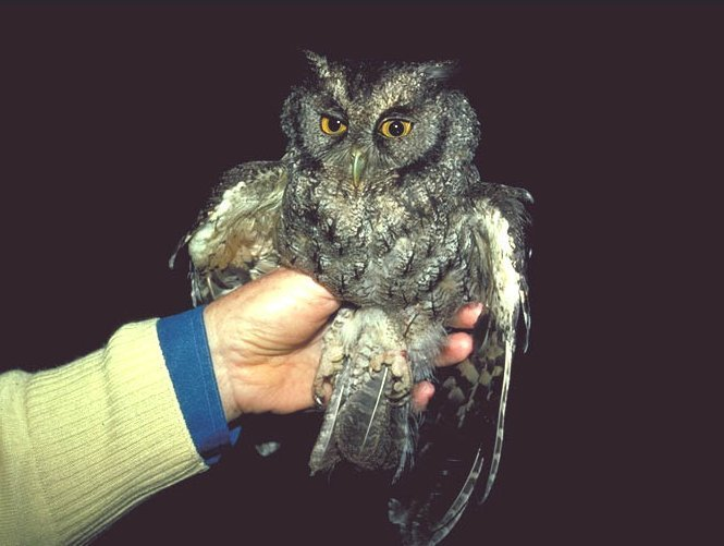 An Owl in the Hand Is Worth Two in the arbre