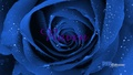 BIG BEAUTIFUL BLUE ROSE - teen-titans-raven wallpaper