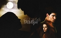 Jacob and Bella Wallpapers - taylor-jacob-fan-girls wallpaper