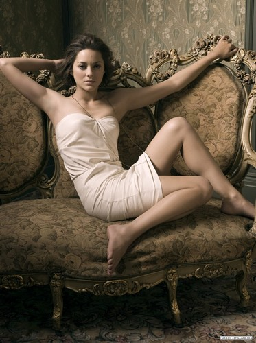 Marion Cotillard wallpaper probably containing bare legs, tights, and a chemise called Marion Cotillard | Telegraph Photoshoot (2009)