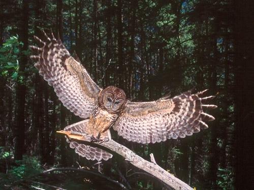 Nice Wingspan !
