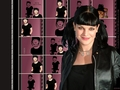 abby-sciuto - OK, who did this? wallpaper