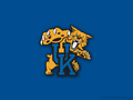 Wildcats - kentucky-basketball wallpaper