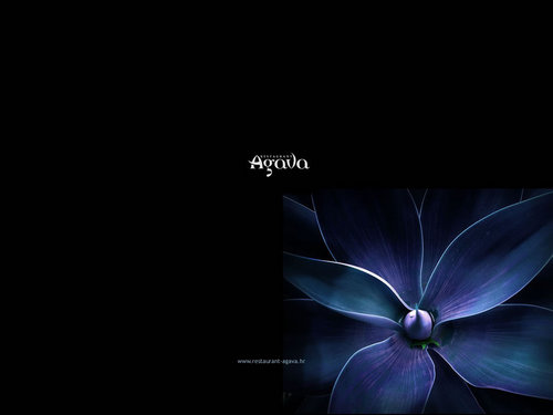 Facebook wallpaper titled blue_cynea