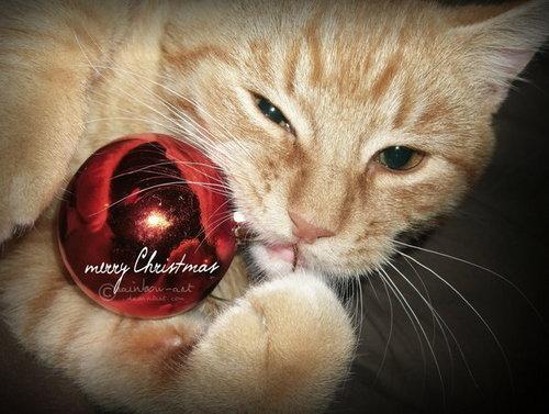 Рождество Кошки