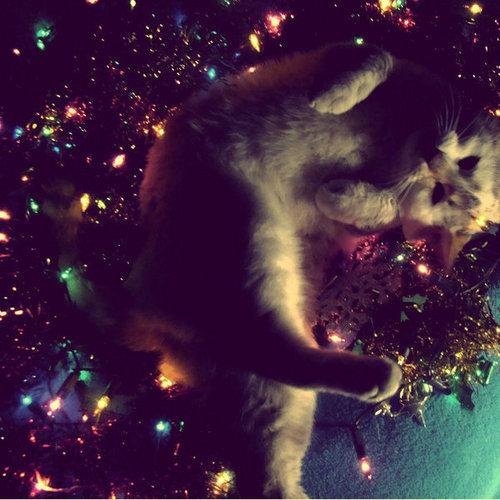 navidad gatos