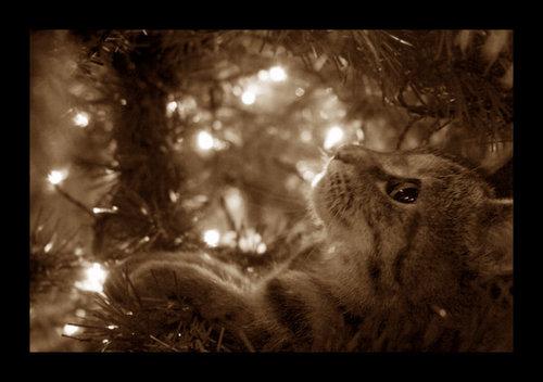圣诞节 猫